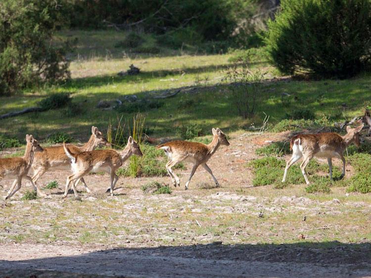excursion escolar a Doñana 4x4. viaje fin de curso a doñana.oferta viaje fin de curso doñana